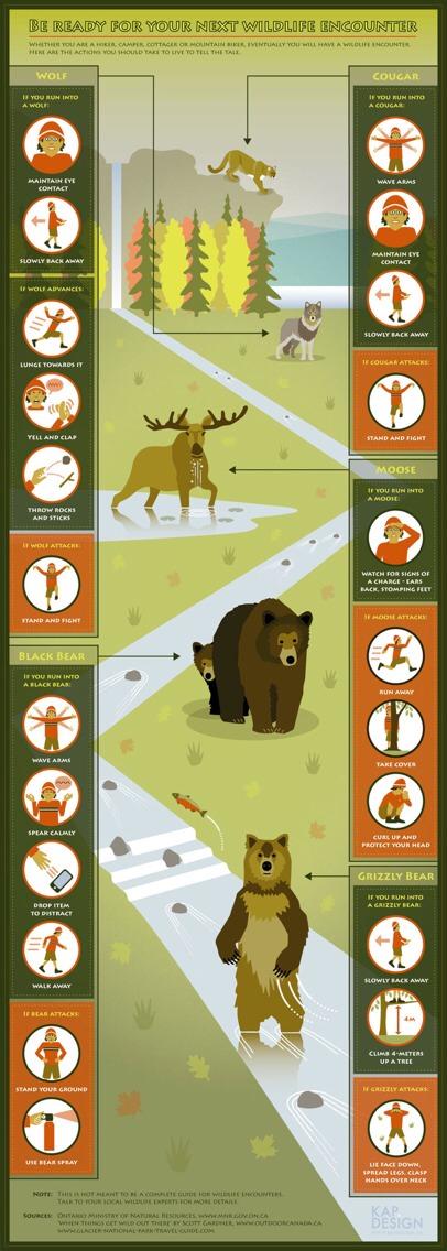 --> How to React to a Wildlife Encounter