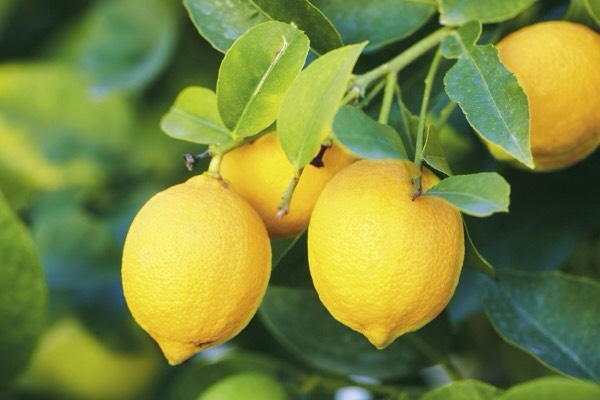 4⃣LEMON is wonderful for your skin, so finding products that contain it is an easy way to naturally care for your entire body. Not only does the citrus refresh your skin, but it also tightens & tones skin. It can also help disinfect your skin & revive tired, washed out skin.