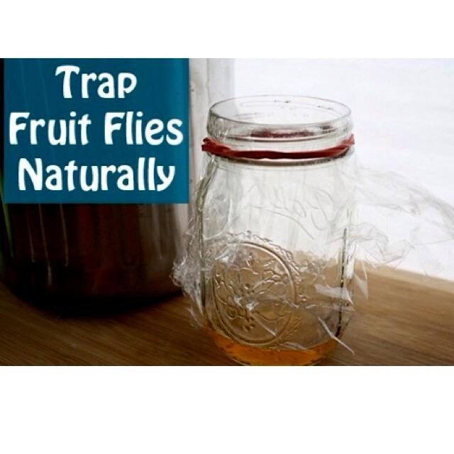 Get rid of fruit flies NOW! So easy