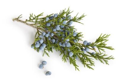 Juniper  When diluted, it can speed healing time and help prevent infectionsd