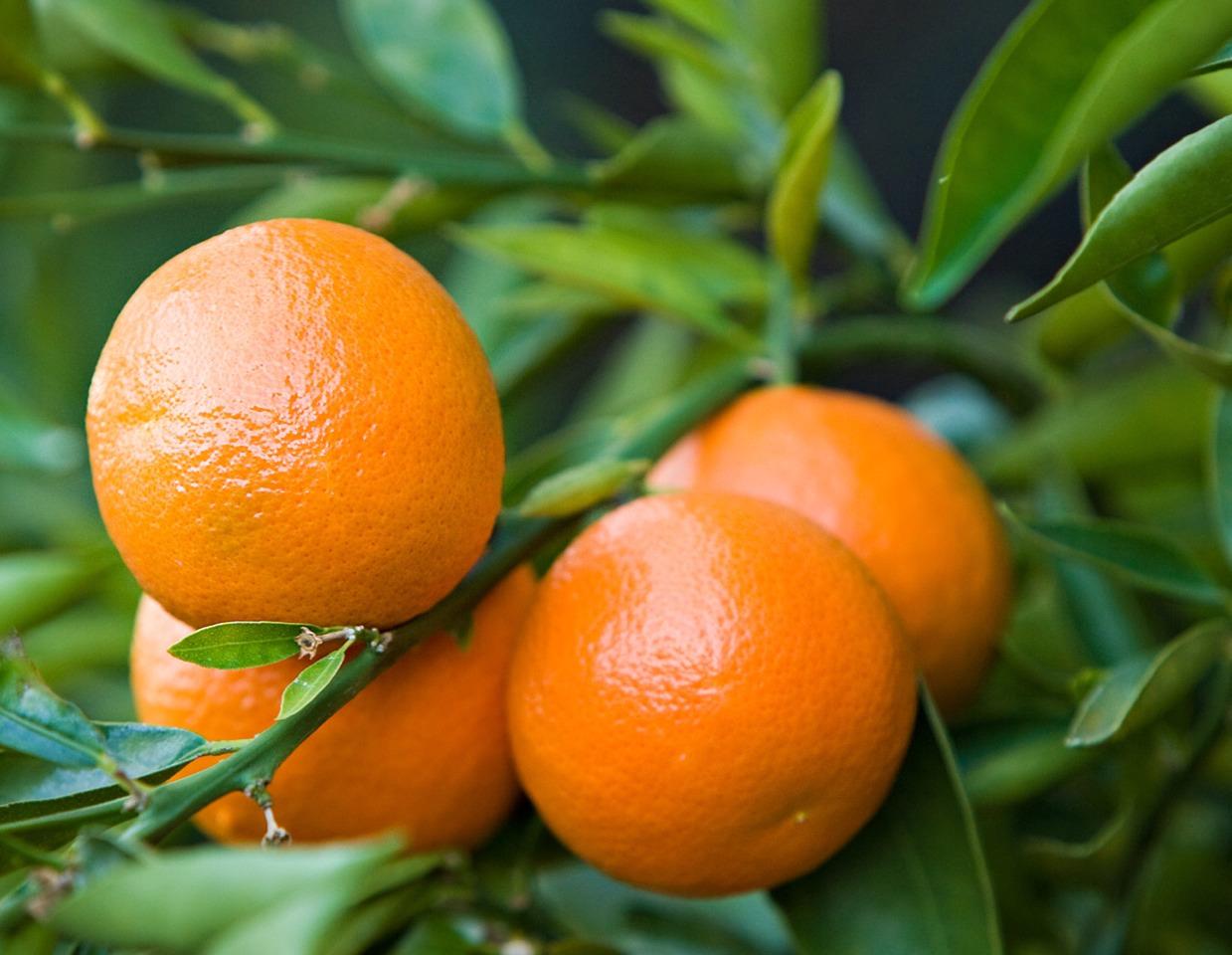 1/4 clementine