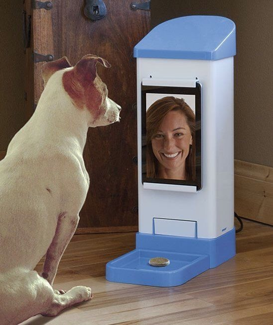 12.iCPooch $149.99 Now you can videochat with your dog anytime and deliver a cookie using your phone, tablet or computer from anywhere!