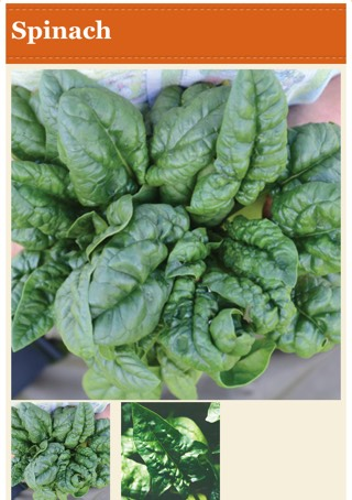 Use fresh spinach, because it doesn't have too much water. Water could make the calzone soggy.