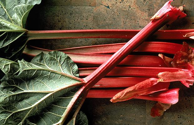 Rhubarb  The stalks of rhubarb are edible, tart, and delicious. Chop them up and cook them with water until tender (and, optionally, a sweetener of your choice.