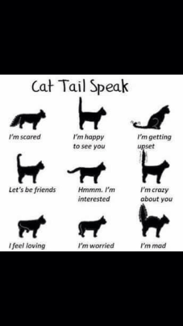 Cat & Dog Languages 🐱🐶💕 by Ashley Doss - Musely