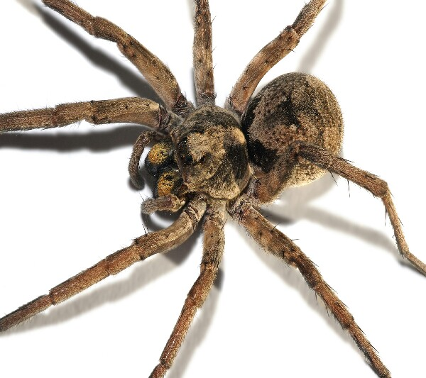 Did you know: You eat at least seven spiders throughout your life... i would keep a close eye out