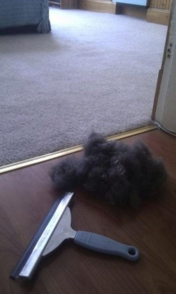 26. Remove pet hair from carpet with a squeegee.