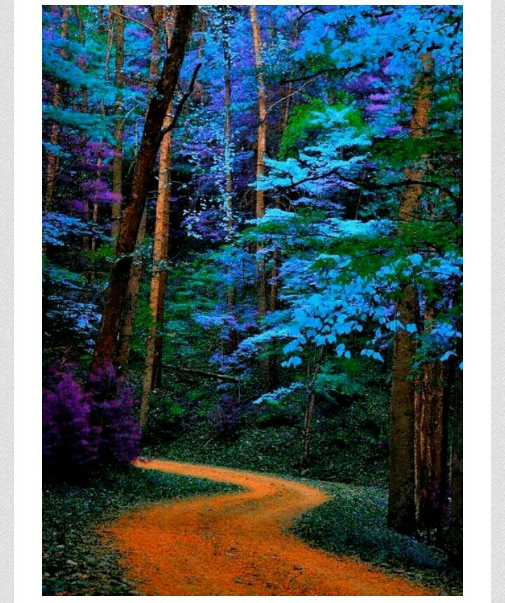 Blue Tree Path, Great Smoky Mountain National Park, Tennessee